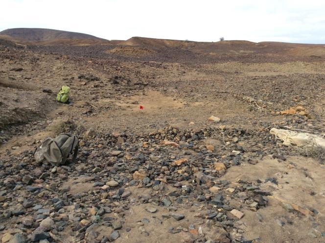 Site de la découverte à Napudet, Kenya. Le drapeau rouge indique l'endroit où se trouve le crâne du primate.