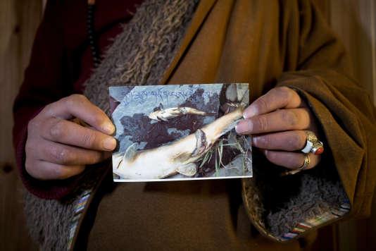 Un Tibétain montre une photo prise en octobre 2013, près de la mine de Rongda, à Jiajika, en février.