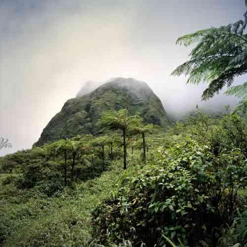 La montagne Pelée, un paradis pour amoureux de treks et de nature sauvage.