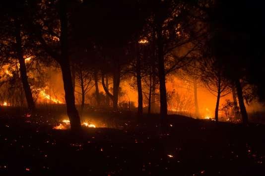 Feu de forêt près de Carnoux-en-Provence, dans les Bouches-du-Rhône, le 19 août.