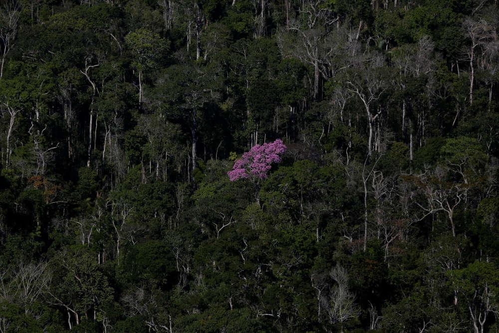 Sans fournir d'éléments, le ministre de l'environnement, José Sarney Filho, est pourtant optimiste:«Tout indique que la courbe décroît.»