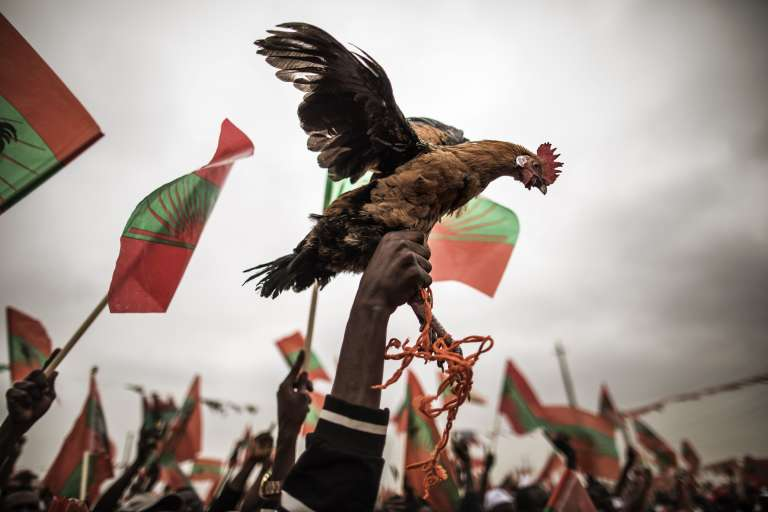 Un militant de l'Unita porte un poulet, l'emblèmedu principal parti d'opposition, à Luanda, le 21août 2017.
