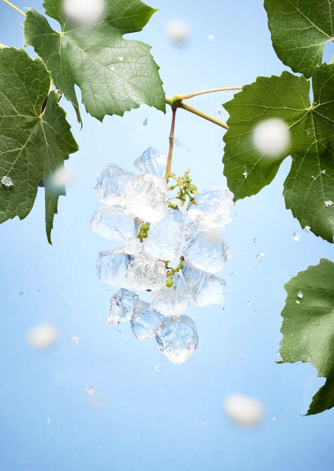 Feux de paille, chaufferettes, éoliennes, hélicoptères… Les vignerons ont tout tenté pour lutter contre le gel cette année.