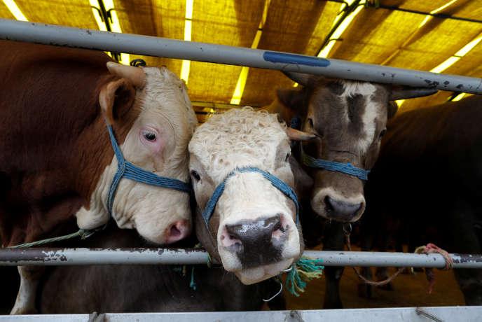 L'élevage est à l'origine de l'augmentation des gaz à effet de serre.