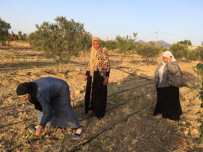 Les pionnières de la coopérative deZaghouan, Nejia (à droite, au téléphone), Naima (au centre) et Souhel sur leurs premières plantations de moringa.