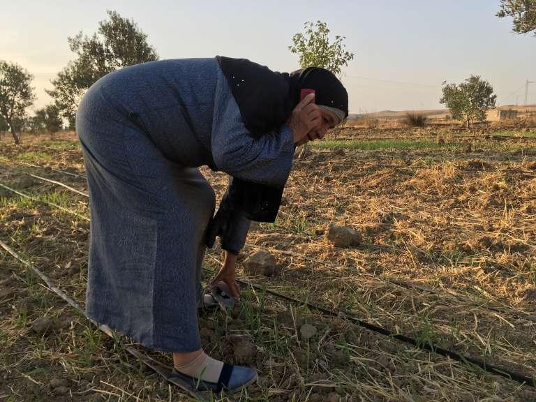 Souhel, une cultivatrice de moringa près deZaghouan, en Tunisie.