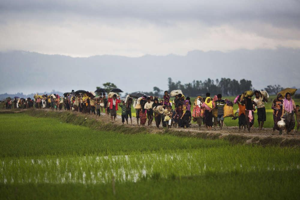 Des Rohingya traversent des rizières après avoir passé la frontière du Bangladesh, près de Cox's Bazar, dans le sud-est du pays, le 1er septembre.