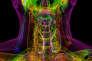 Imagerie médicale montrant l'anatomie du cou, réalisée à partir d'une tomographie 3D : larynx, pharynx, œsophage, glande thyroïde...