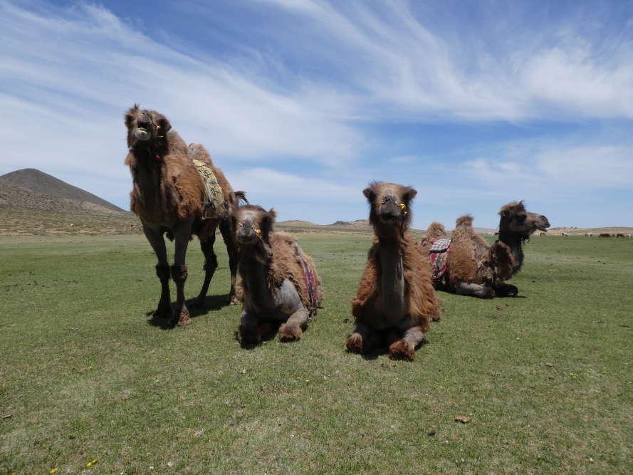 A dos de chameaux de Bactriane, première excursion vers le lac Tara,où alternent dunes, roches volcaniques et steppes verdoyantes.