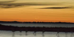 L'aube au-dessus de l'étang de l'Or, près de Montpellier.