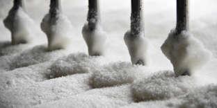 La production européenne de sucre pourrait croître cette année de 15% à 20% en2017.