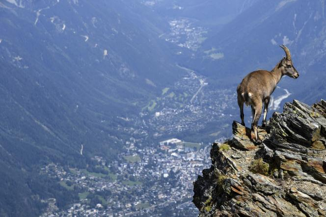 Dans la vallée de Chamonix, le 27 août.