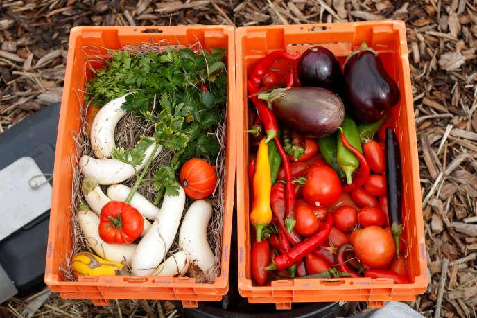 Des fruits et légumes récoltés dans un jardin sur un toit à Paris, le 22 septembre 2017.