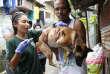 Campagne de vaccination contre la rage à Manille, aux Philippines, le 26 septembre.
