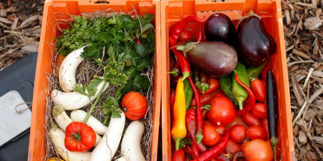 Si les prix des fruits sont à la baisse en2019, les légumes sont toujours plus chers
