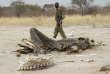 Un garde-forestier se tient à proximité d'une carcasse d'éléphant empoisonné au cyanure par des braconniers, en septembre 2013, au parc national Hwange, au Zimbabwe.