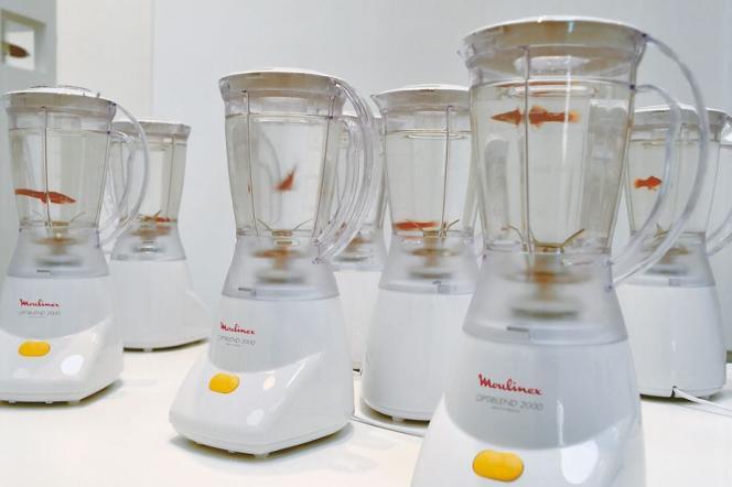 L'installation de Marco Evaristti avec mixeurs et poissons rouges.