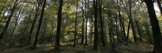 La forêt des Andaines regorge de variétés de champignons.