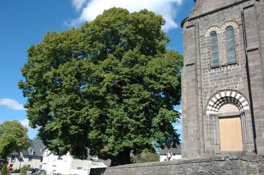 Le tilleul d'Olby, dans le Puy-de-Dôme, planté du temps d'Henri IV.