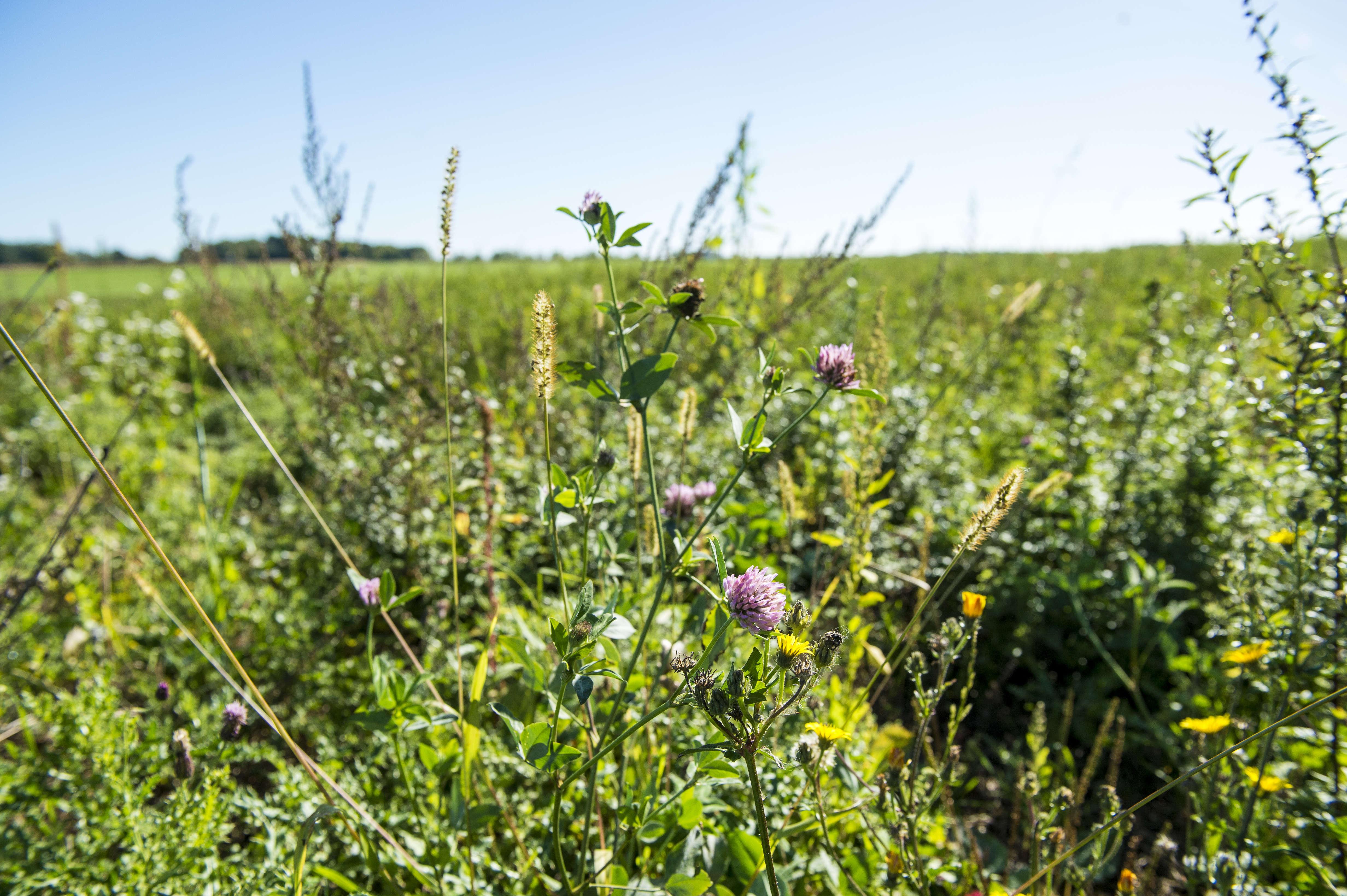 Pour Yves Chantereau, « les pesticides, c'est comme les antibiotiques, c'est pas automatique ». Olivier Chaloche, lui, prescrirait plutôt une « prévention de la maladie ».