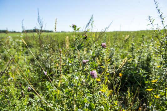 Dans une ferme à Cortrat,dans le Loiret, qui n'utilise pas de glyphosate.