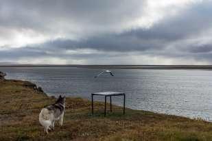 La cabane en bois où cohabitent quelques scientifiques et les gardes de la réserve naturelle du delta de la Lena offre une vue surplombante. En septembre, le fleuve est encore navigable. Il sera ensuire pris dans les glaces jusqu'au printemps.