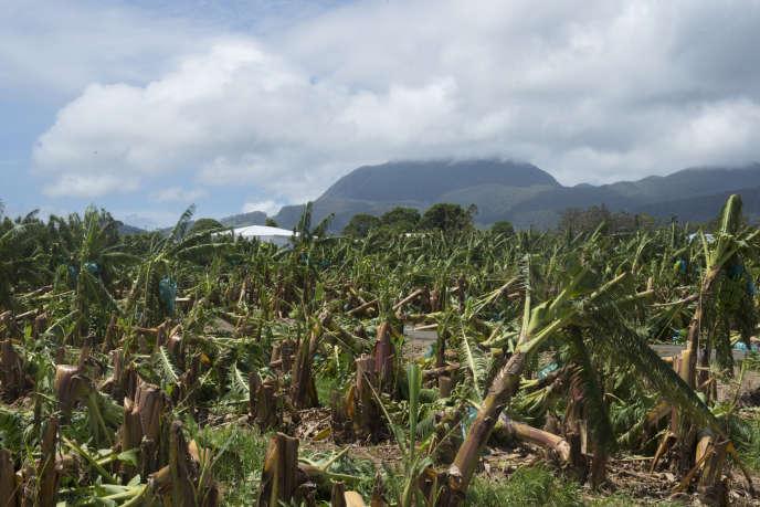 Une bananeraie ravagée à Moravie, sur la commune de Capesterre-Belle-Eau, le 22 septembre, après le passage de l'ouragan Maria sur la Guadeloupe.