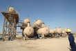 Les champs pétroliers de Barjisiya à l'ouest de Bassora dans le sud de l'Irak, en 2009.