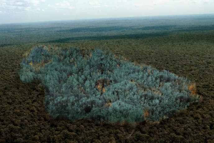 La Zone bleue» (2015), de Stéfane Perraud et Aram Kebabdjian: un projet de forêt génétiquement modifiée qui s'oxyde en virant au bleu.