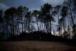 Une partie de la forêt brûlée à Vila Nova, au Portugal, le 17 octobre.
