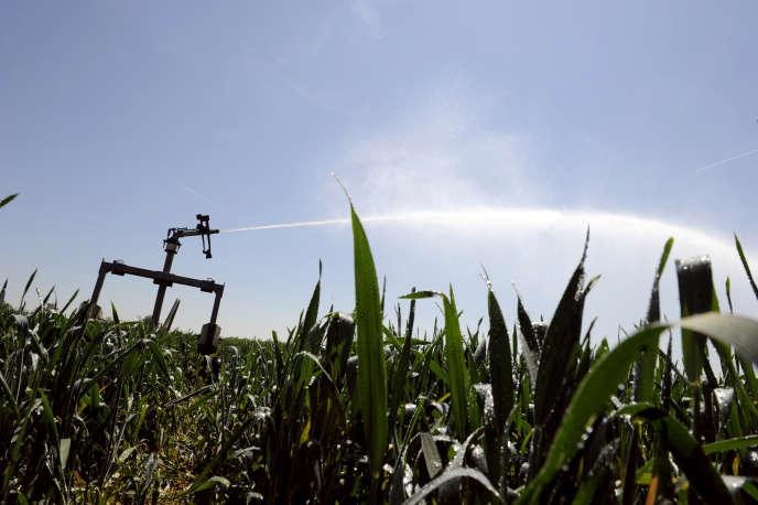Irrigation de maïs près de Lyon, en 2011.