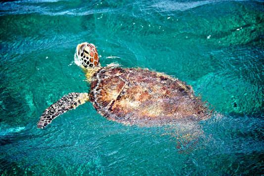 Au milieu des tortues.