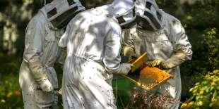 Selon l'UNAF, le sulfoxaflor est aussi un néonicotinoïde – sans être classé comme tel par les industriels et les agences réglementaires en Europe.