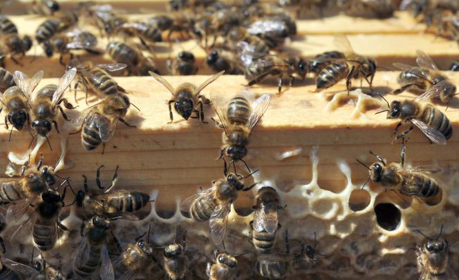Ces molécules « se transforment dans les sols en métabolites qui persistent dans l'environnement, et peuvent se retrouver durablement dans les cours d'eau et les nappes phréatiques» (Ruche d'abeilles noires en Bretagne).