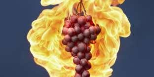 En octobre 2017, la Californie a subi plusieurs incendies. Cet Etat assure 85% de la production viticole américaine.