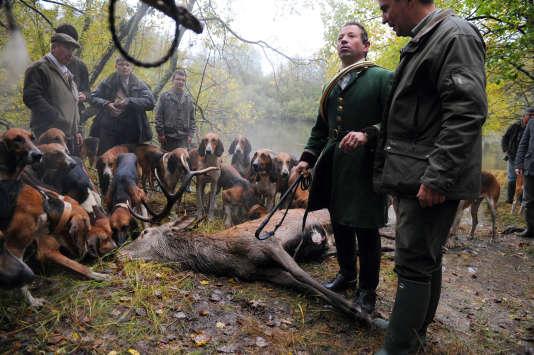 Un cerf tué lors d'une chasse à courre dans la forêt d'Amboise, en Indre-et-Loire, en 2012.