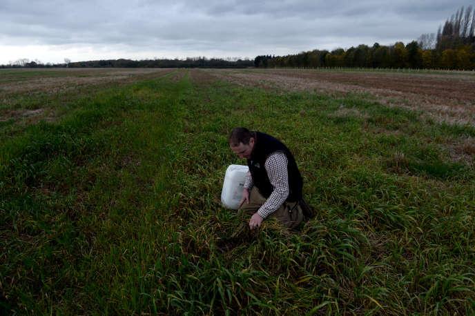 Dans la ferme d'Edward Folk, à Brentwood, au Royaume-Uni, où l'on emploie du glyphosate.