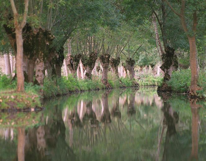 Dans le Marais poitevin, deuxième zone humide de France, en 2001.