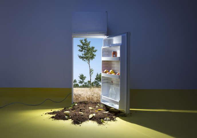 A l'intérieur du réfrigérateur, parcelle agroforestière mêlant noyer et culture de blé dur, Domaine de Perdiguier,Maraussan (34).
