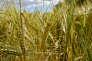De la production agricole à l'argent du consommateur, les chercheurs de la TSE-R étudient tous les aspects de l'économie alimentaire.