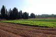 Les Etats généraux de l'alimentation sont l'occasion de réfléchir à la relance de l'agriculture en France.