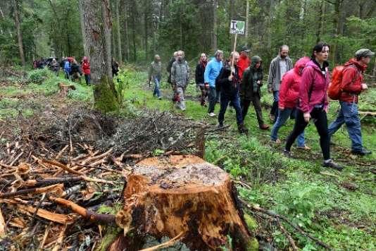 Des manifestants s'opposent depuis des mois à l'abattage d'arbres dans la forêt de Bialowieza.