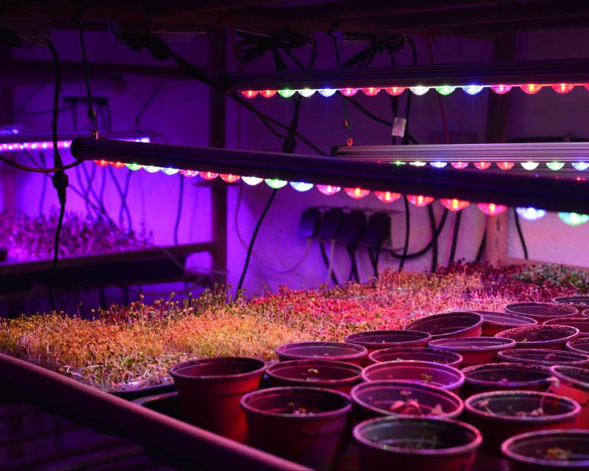 Sous des lampes à LED qui reproduisent le spectre solaire, Cycloponics fait pousser des graines germées et des plantes aromatiques.