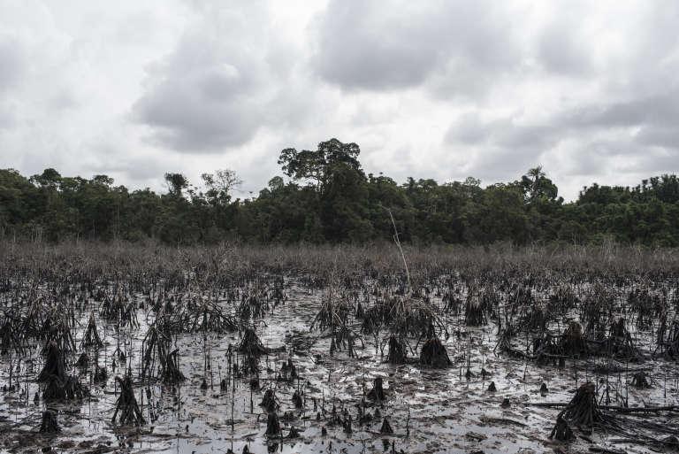 Pollution provoquée par l'exploitation illégale de pétrole, près de Warri ( Nigeria), le 19 avril.