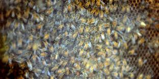 Une ruche à Montpellier.