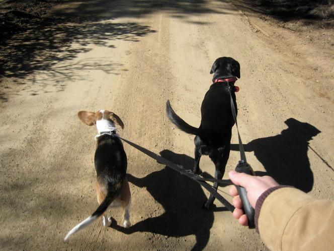 La race du chien n'est pas indifférente: les chiens de chasse sont les meilleurs gardiens du cœur de leur maître, selon l'équipe de Mwenya Mubanga, de l'université d'Uppsala, en Suède.