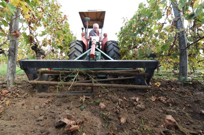 Dans le vignoble du Château Fontbaude, qui produit le castillon-côtes-de-bordeaux, le désherbage est réalisé sans herbicide. C'est une machine, munie d'une roue, qui arrache les adventices.