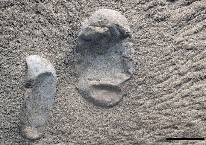 Oeufs de ptérosaures trouvés en Chine.