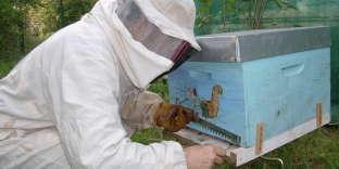 Les ruches colorées de Jean-Michel Normand, dans le Gâtinais.