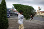 A man carries a Christmas tree after buying it from a street vendor in San Jose, Costa Rica, November 30, 2017. REUTERS/Juan Carlos Ulate